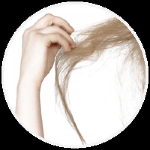 Suhi lasje